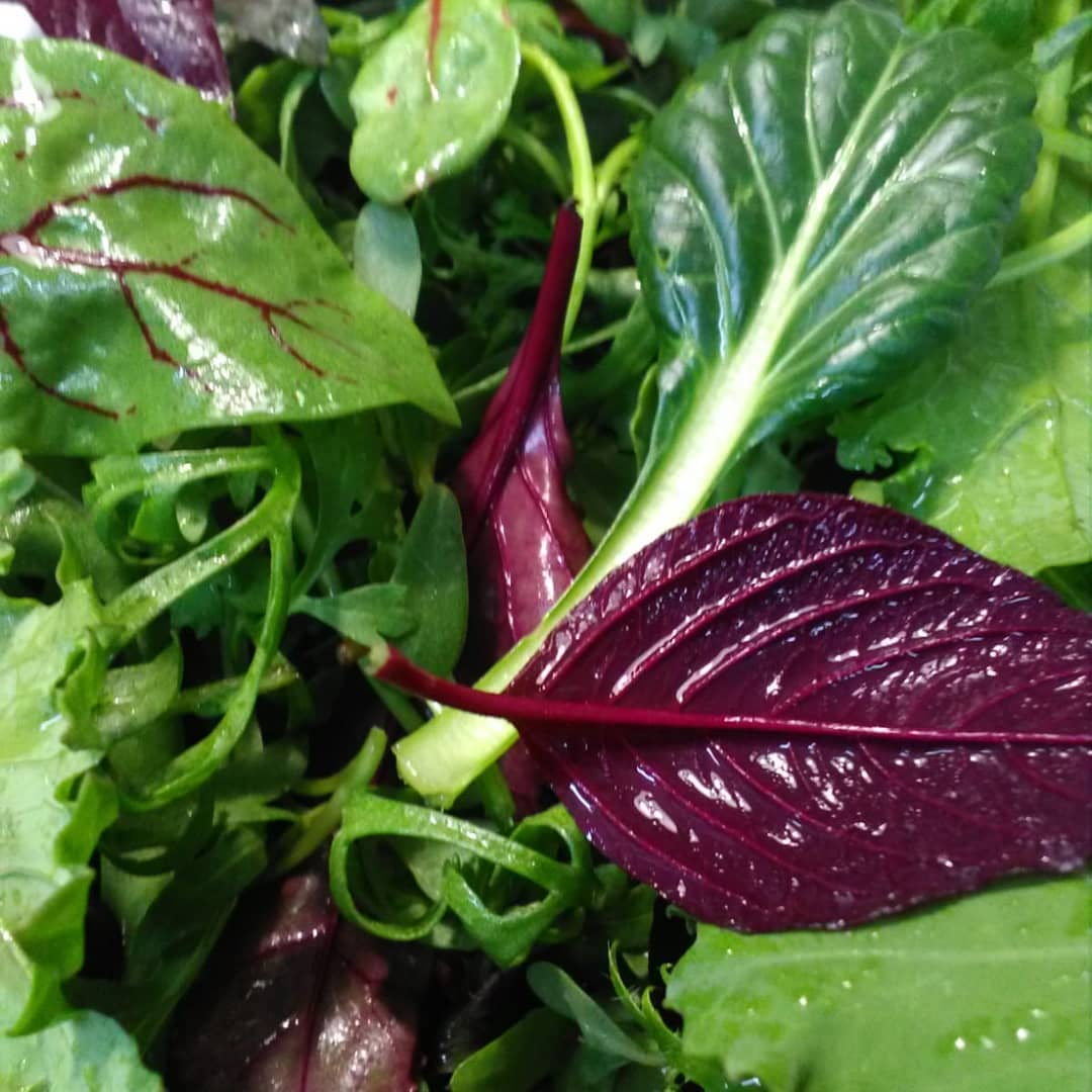 Brotes y mini verdura ecológica. La Tula Bouzas